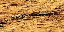 Скелет ящерицы на Марсе