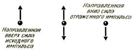 Силы, приложенные к закрепленному концу отрезка резиновой трубку